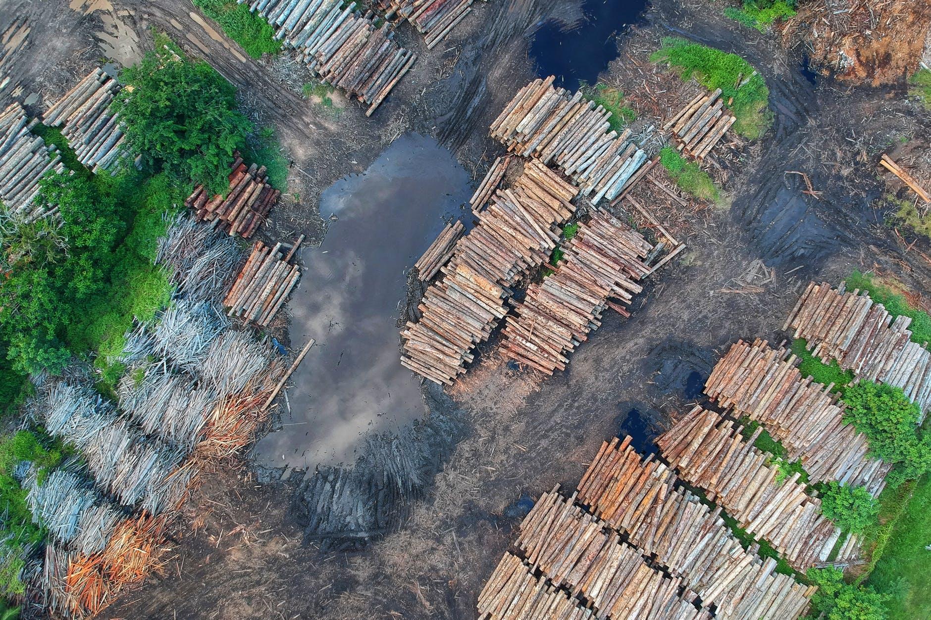 Covid-19: La baisse de la biodiversité et la hausse du nombre d'épidémies.
