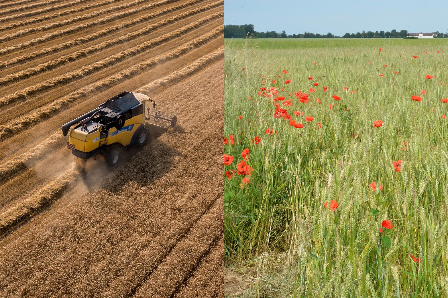 Le rôle vital de l'agriculture: de la  Covid-19 à la transition écologique