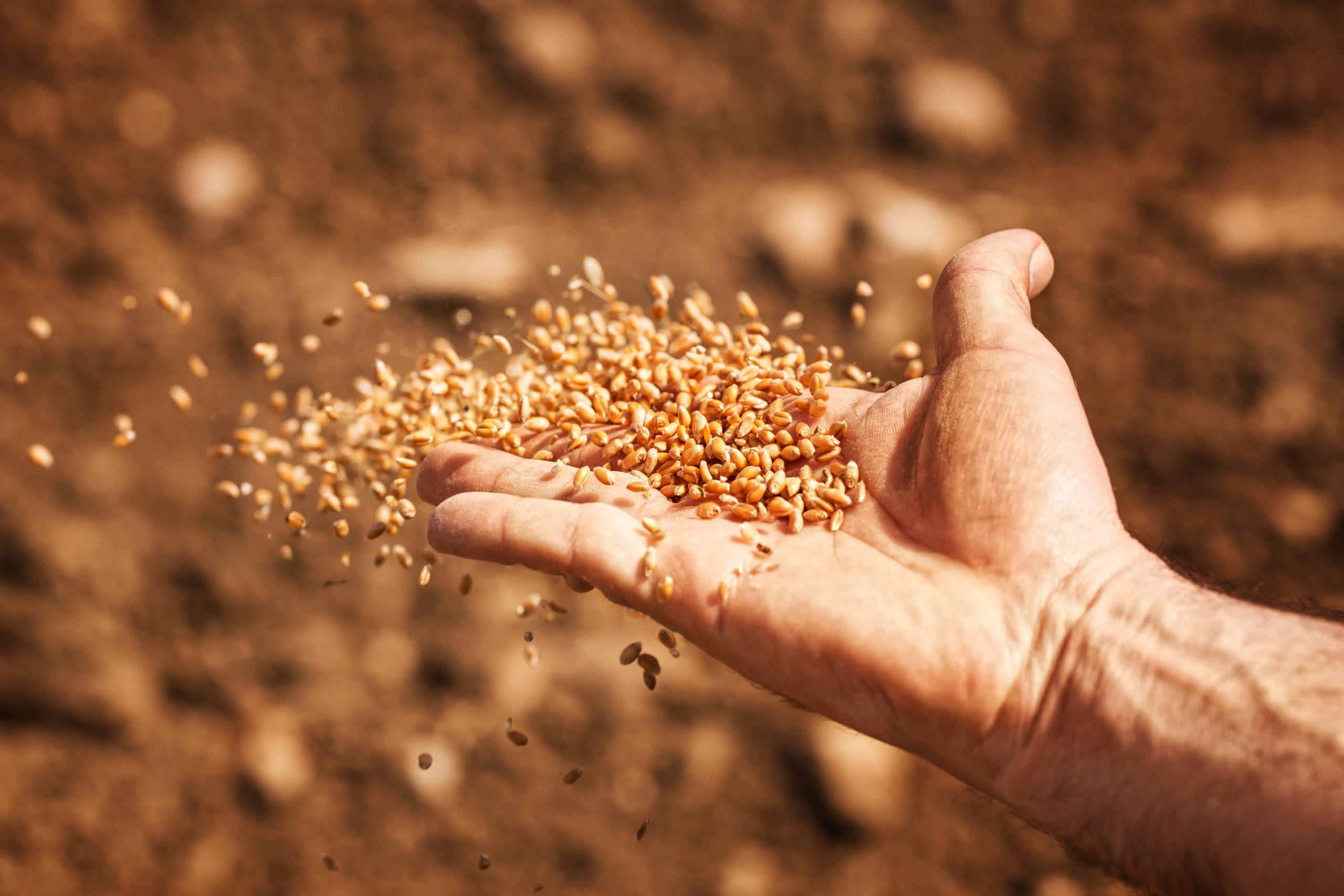 La difficile réforme de la loi illégitime sur les semences!